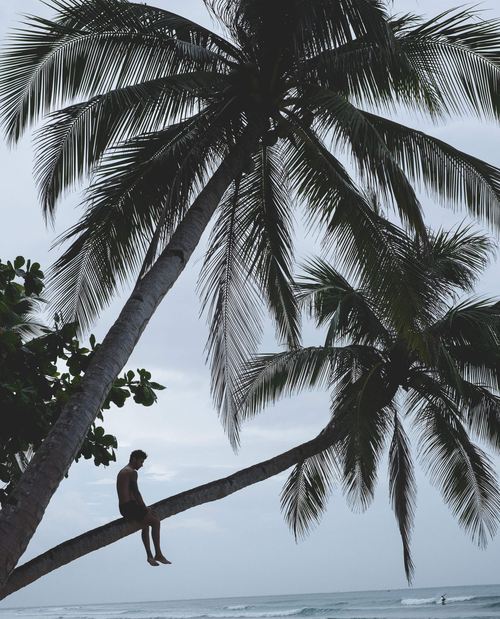 Coconut Crazy   Does It Matter What Type of Coconut Oil To Use?