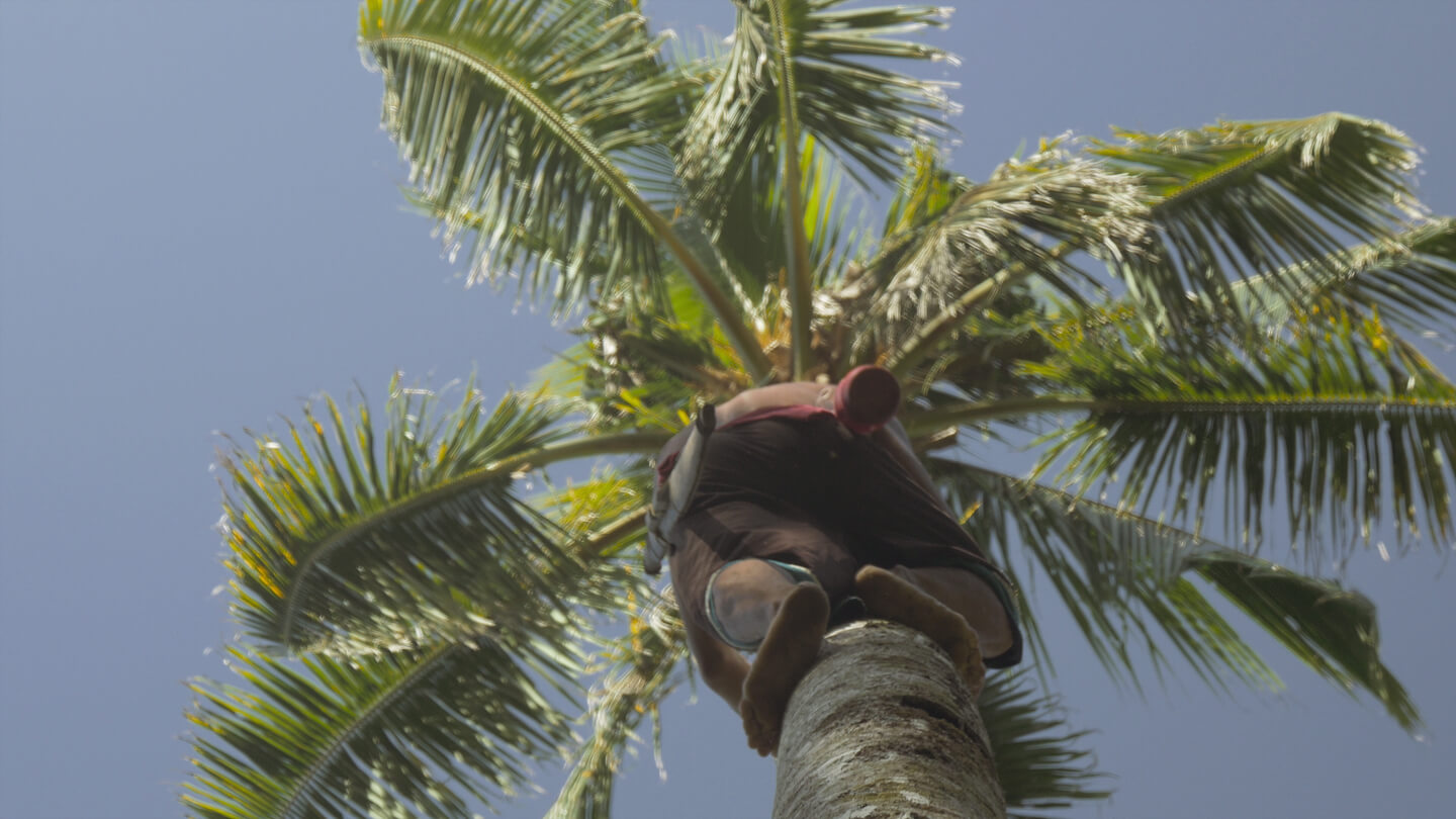 man on a coconut tree