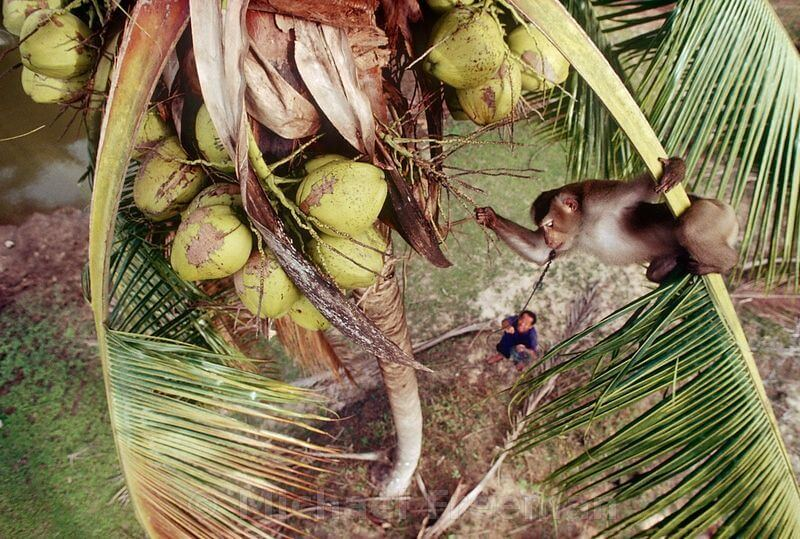 3 Questions to Ask Before Buying Coconut Products