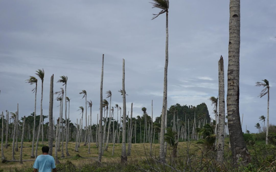 Is the Coconut Craze Hurting Our Planet?