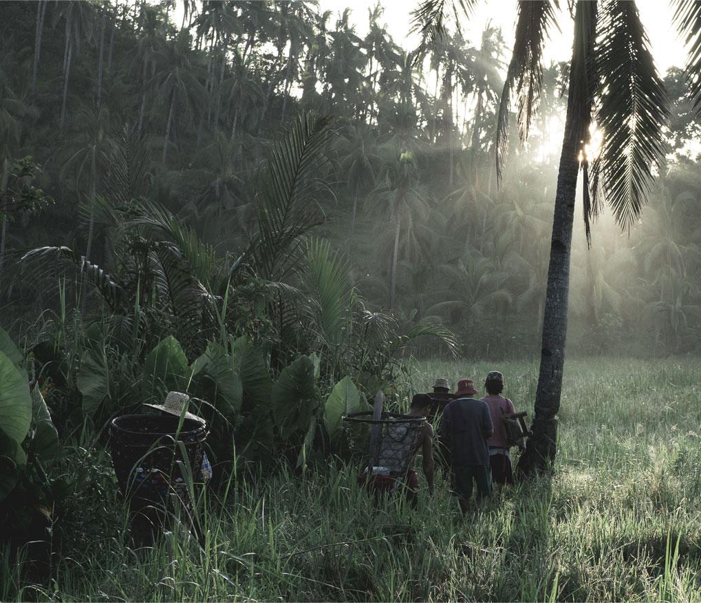 coconut craze hurting farmers?