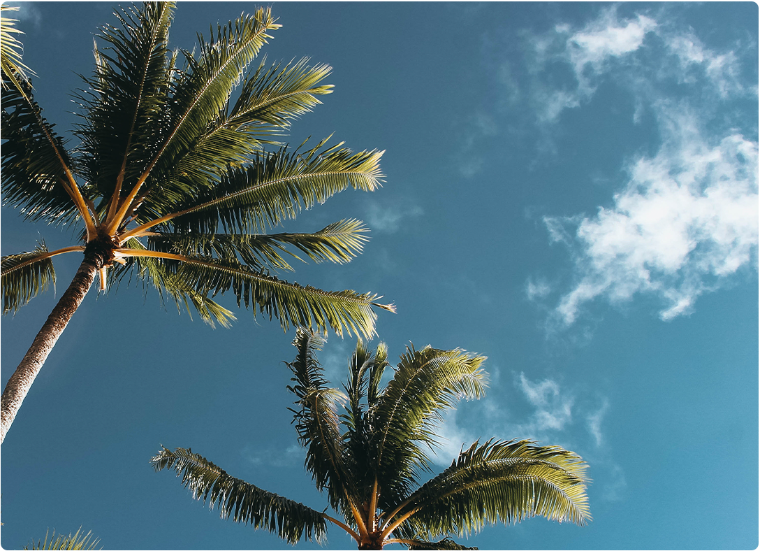 kinabuhi: plant a coconut palm tree to help coconut farmers
